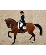 DVD - The HORSE in SPORT: DRESSAGE - $39.99
