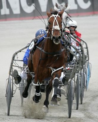 Primary image for DVD - The HORSE in SPORT: HARNESS RACING