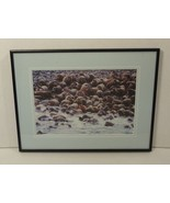 Custom Made Framed Matted Photograph Walrus 15in x 11in x 1in Vintage Glass - $24.60
