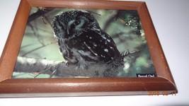 Framed Boreal owl postcard. - $17.68