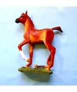 Arabian-foal_thumbtall
