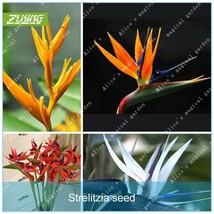 100pcs Strelitzia Reginae Seed Flower Seeds Bonsai Plants For Home Garden - $2.18