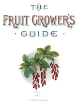 Vintage Fruit Prints: Berberries - Fruit Growers Guide - 1880 - $12.82+