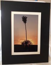 "Photograph: matted ""Yucca at Sunset"" (metallic photo paper), 11""x14"" / 5... - $16.50"