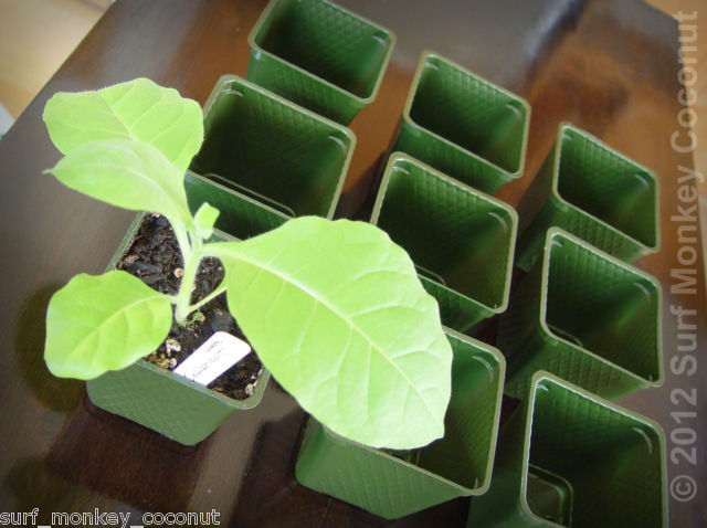 Heirloom Seed Starter Kit: Plastic Pots + Seedling Trays + Plant Labels + Seeds