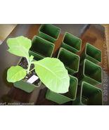 Heirloom Seed Starter Kit: Plastic Pots + Seedling Trays + Plant Labels ... - $6.40