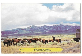 Oregon Greetings from Le Grande Cattle Steer Vintage Rembrandt Postcard - $6.69