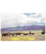 Oregon Greetings from Le Grande Cattle Steer Vintage Rembrandt Postcard - $6.69