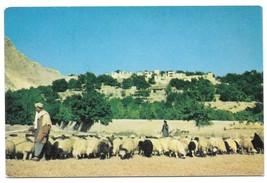 Vintage Afghanistan Postcard Shepherd and Sheep Village near Kabul  - $5.69