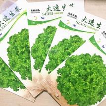 Lettuce Fast Growing Vegetable Organic Seeds, 5 packs, 200 seeds/pack, romaine l - $8.95