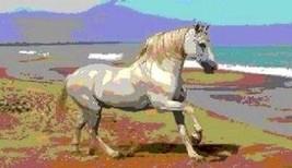 Horse Magnet #6 - $7.99