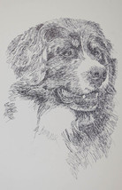 Bernese Mountain Dog Breed Portrait Art #68 Kli... - $49.45