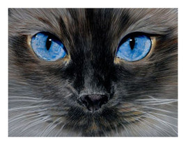 8 Fine Art Illustrated Blued Eyed Gray Black Ca... - $14.95