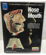 NEW Lindberg Nose Mouth Model Anatomy NOS Vintage 1982 Sealed USA Made S... - $9.79