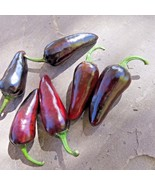 Czech Black hot pepper - a shiny, black pepper with some serious heat - $4.50