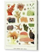 The Great Barrier Reef of Australia Chromo VI 1893 William Saville-Kent ... - $91.63+