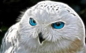 SPELL MAGIC OWL SPIRIT bring me the power, the knowledge,the magick