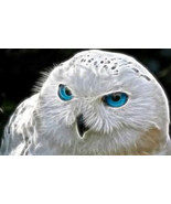 SPELL MAGIC OWL SPIRIT bring me the power, the ... - $780.00