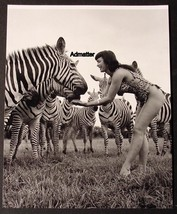 BETTIE PAGE PIN-UP ART POSTER FEEDING ZEBRA IN HOT JUNGLE SUIT SEXY PHOT... - $9.74