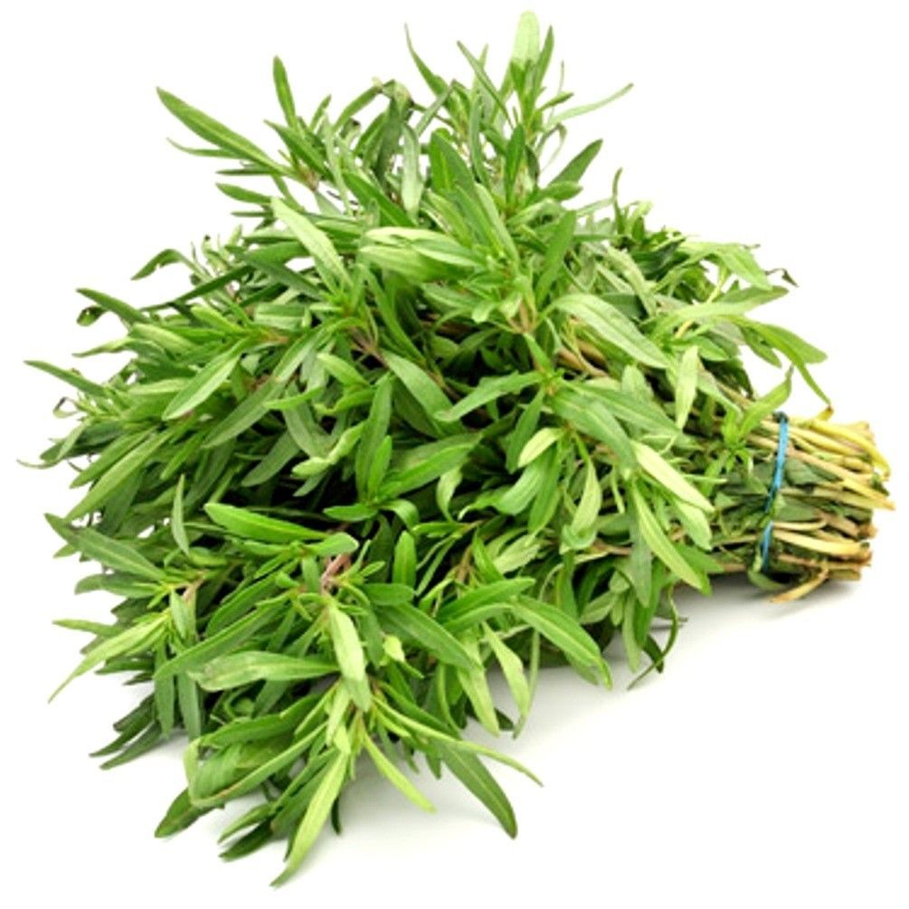 Primary image for SHIP From US, 80K Seeds 2 oz Savory, DIY Herb Seeds ZJ01