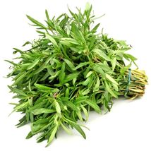 SHIP From US, 80K Seeds 2 oz Savory, DIY Herb Seeds ZJ01 - $50.31