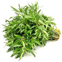 SHIP From US, 80K Seeds 2 oz Savory, DIY Herb Seeds ZJ01 - $50.31