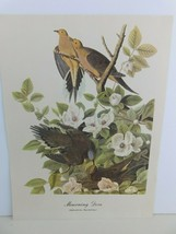 Mourning Dove (Zenaidura Macroura) Bird 9x12 Frameable Print Nature Birds - $11.75