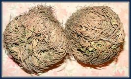 Large Rose of Jericho /Spike Moss / Dinosaur Plant / Doradilla/ Miracle ... - $8.99