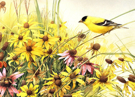 Yellow Finch And Flowers Cross Stitch Pattern***LOOK*** - $4.95