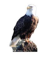AMERICAN BALD EAGLE CARDBOARD STANDUP CUTOUT STANDEE BIRD ZOO PROP 57 - $34.95