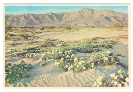 Gardens of the Desert Vintage Petley 4X6 Postcard Arizona Flowers in Bloom - $4.99