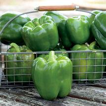 SHIP FROM US 10 Seed Park's Whopper II Hybrid Bell Pepper,DIY Vegetable ... - $23.99