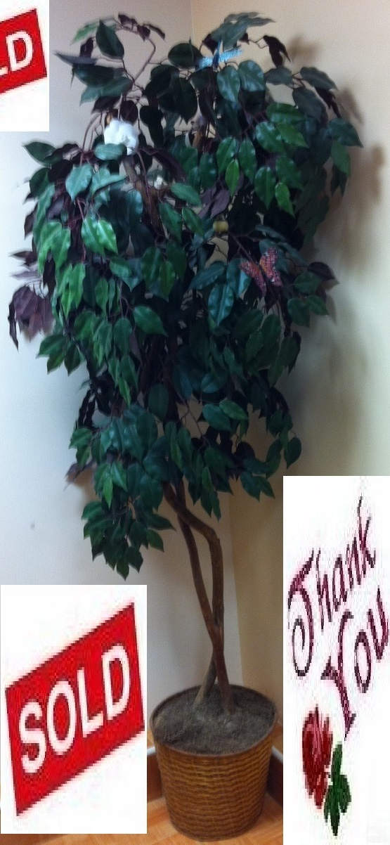 Artificial ficus tree   silk leaves   natural wood trunk   looks real mg 0