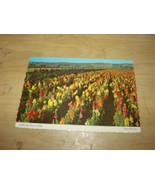 CALIFORNIA FLOWER FIELDS LOMPOC  VINTAGE UNUSED POSTCARD - $5.90