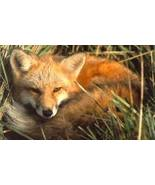 Fox Reiki Attunement/Empowerment/courage/focus/bonus - $2.00