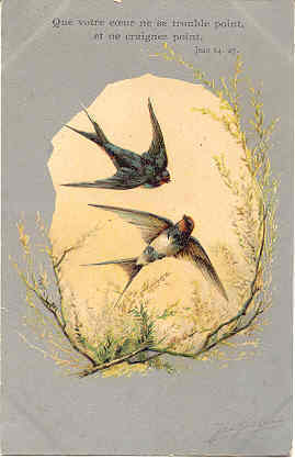 French Swallows artist signed 1906 Post Card