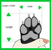 How to measure paws thumb200