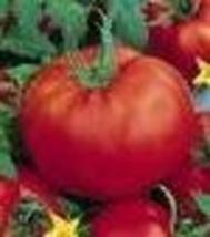 Tomato - Delicious - Non-Hybrid - Non-GMO - St. Clare Heirloom Seeds - $2.25