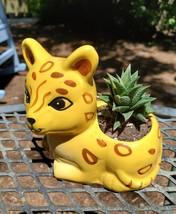 "Yellow Cat Planter with Haworthia Succulent, 4"" glazed ceramic, leopard jaguar image 2"