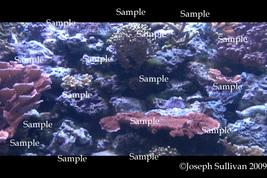 Coral Reef Freebie Computer Wallpaper Digital Download - $0.00