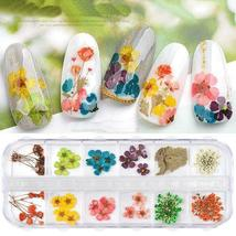 Dry Flowers Nail Art Decorations 3D Natural Daisy Sun Flower - 12 Colors / Box image 3