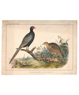 1854 Phasianus Cmdre Perry Japan Expedition Wm Hitchcock Bird LItho PHea... - $9.95