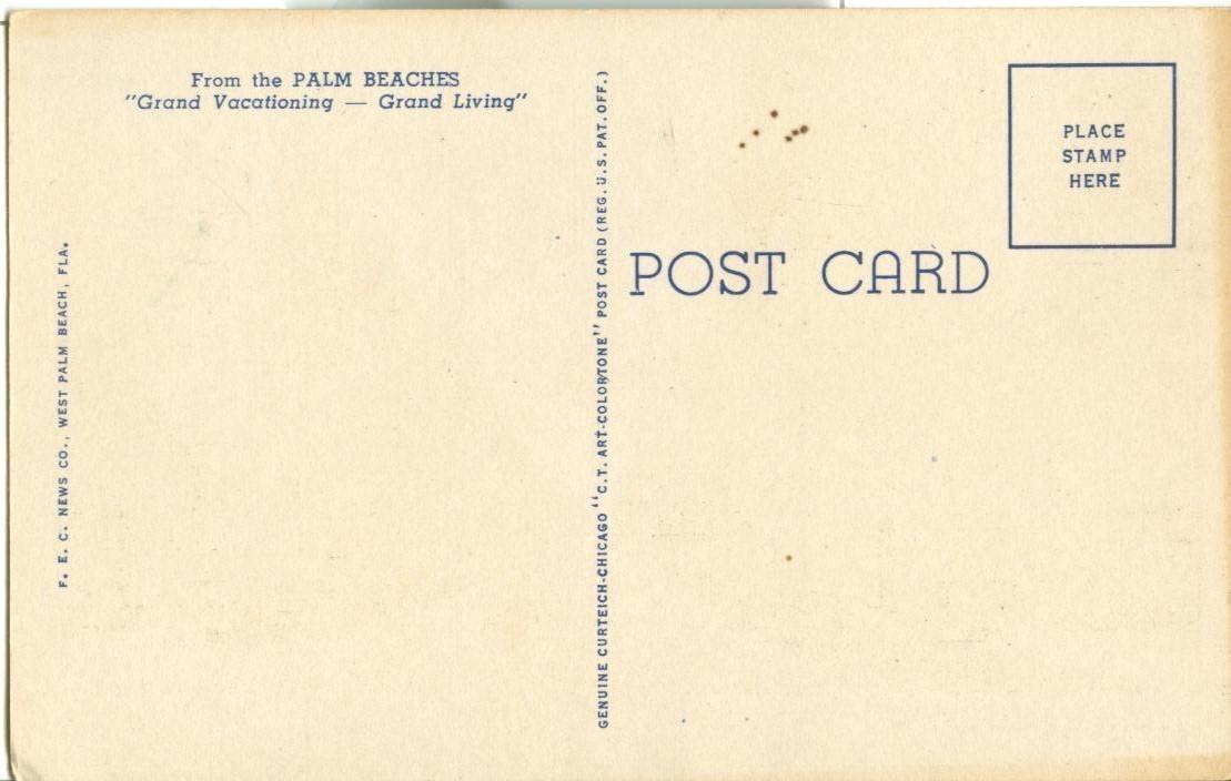 Australian Pines and Hibiscus, Palm Beach, Florida, unused linen Postcard