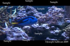 Blue Tang Finding Nemo Fish Freebie Computer Wallpaper Digital Download - $0.00