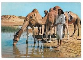 Tunisia Oasis Camels Ile de Djerba Vintage 1965 Ismail Postcard 4X6 Jeri... - $6.99