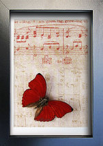 Vintage Music Paper With Red Heart Real Butterfly Art Display - $37.99