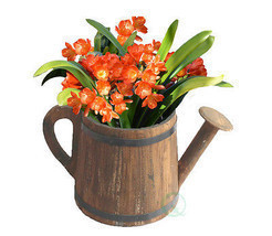 New Vintiquewise Watering Pail Planter, QI003128 - $29.99