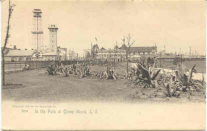 The Park Coney Island New York 1906 Post Card