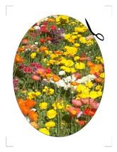 Flower Coaster4-Download-ClipArt-ArtClip-Digita... - $4.00