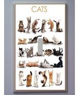 Catsswitc thumbtall